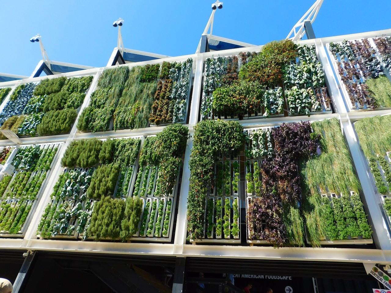 Como crear tu propio jardín vertical en 5 pasos